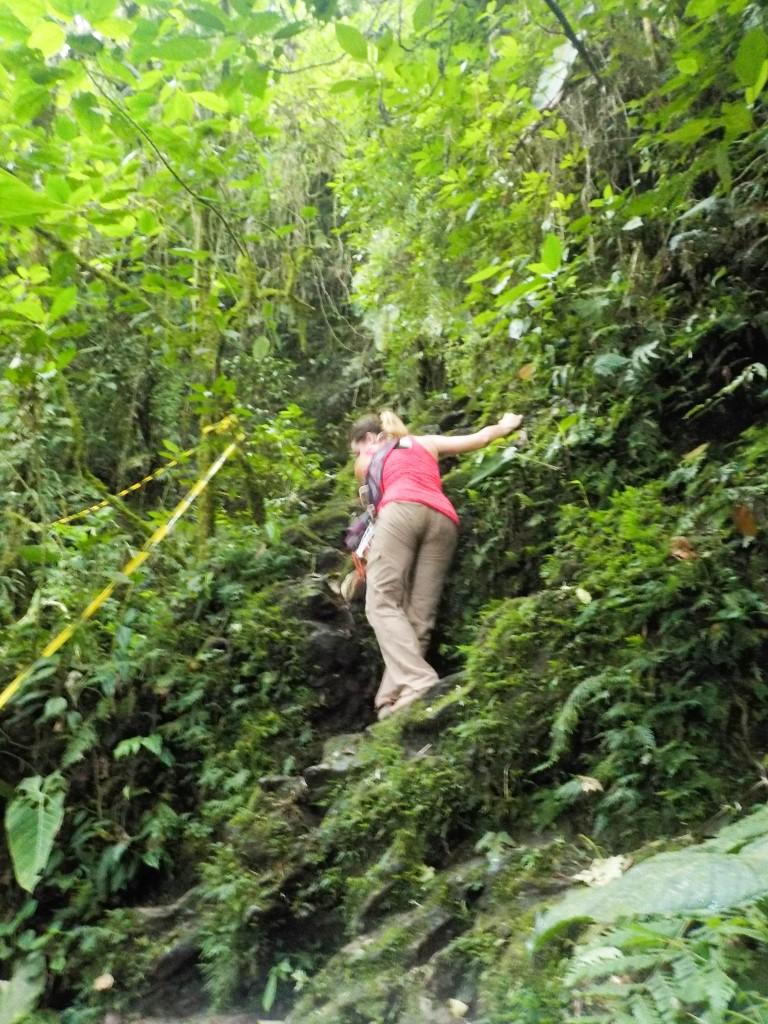 Jungle bash!