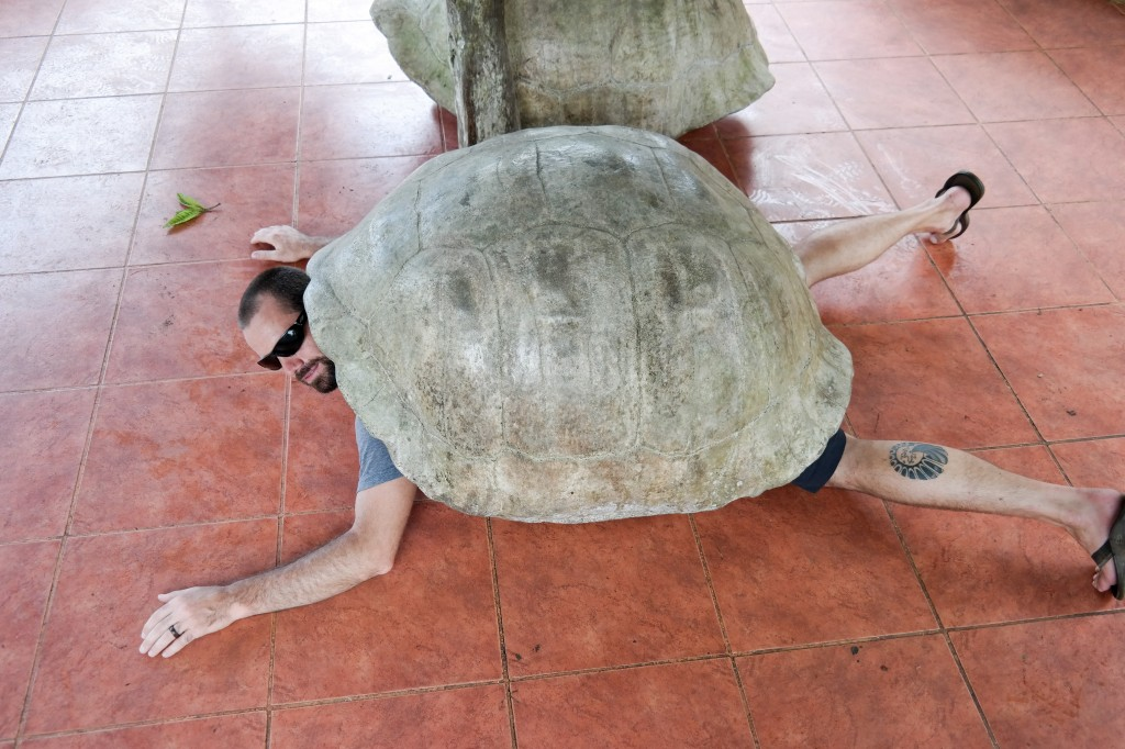 Here we have the Giant Bearded Esus Tortoise, a rare spotting.