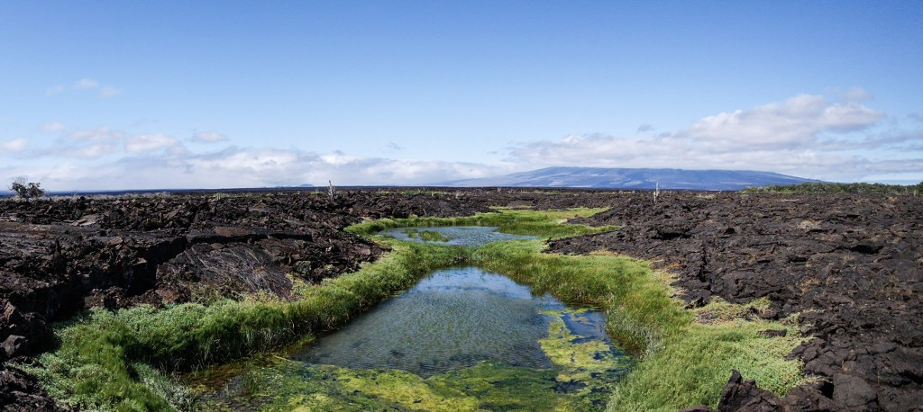 A little life creeping into the vast lava fields
