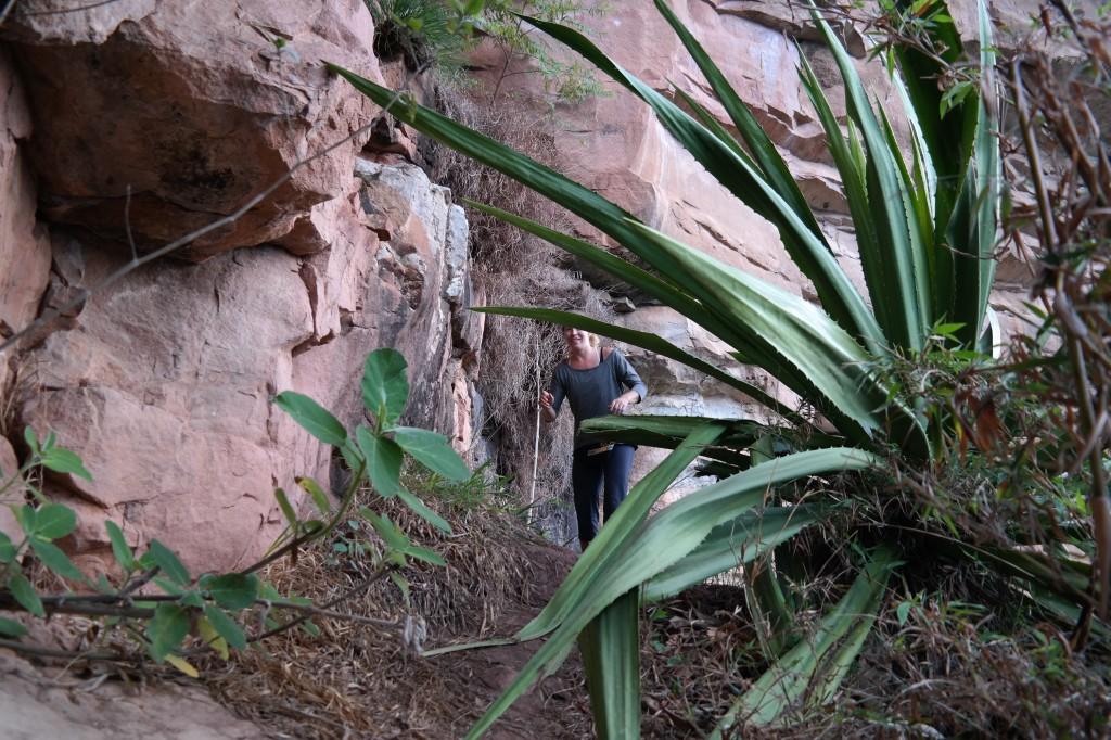 Huge plants along the cliffside!