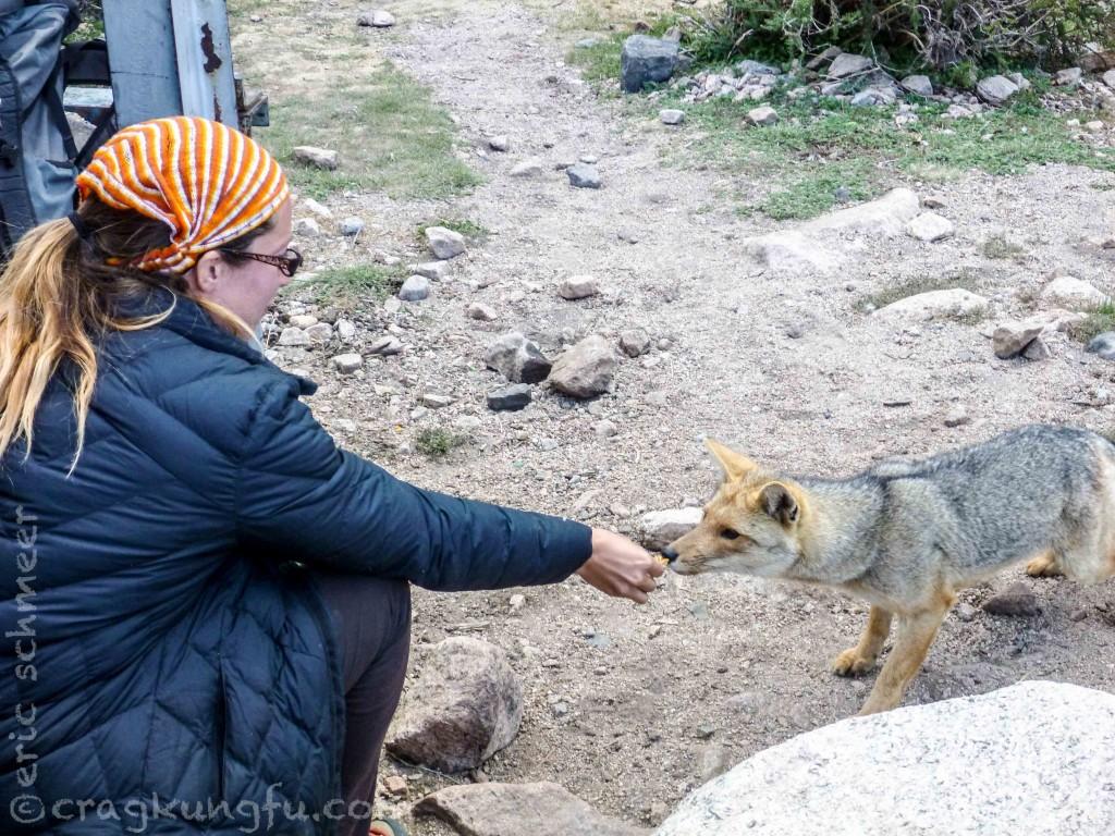Never seen a wild fox get so close to a human. Crazy!